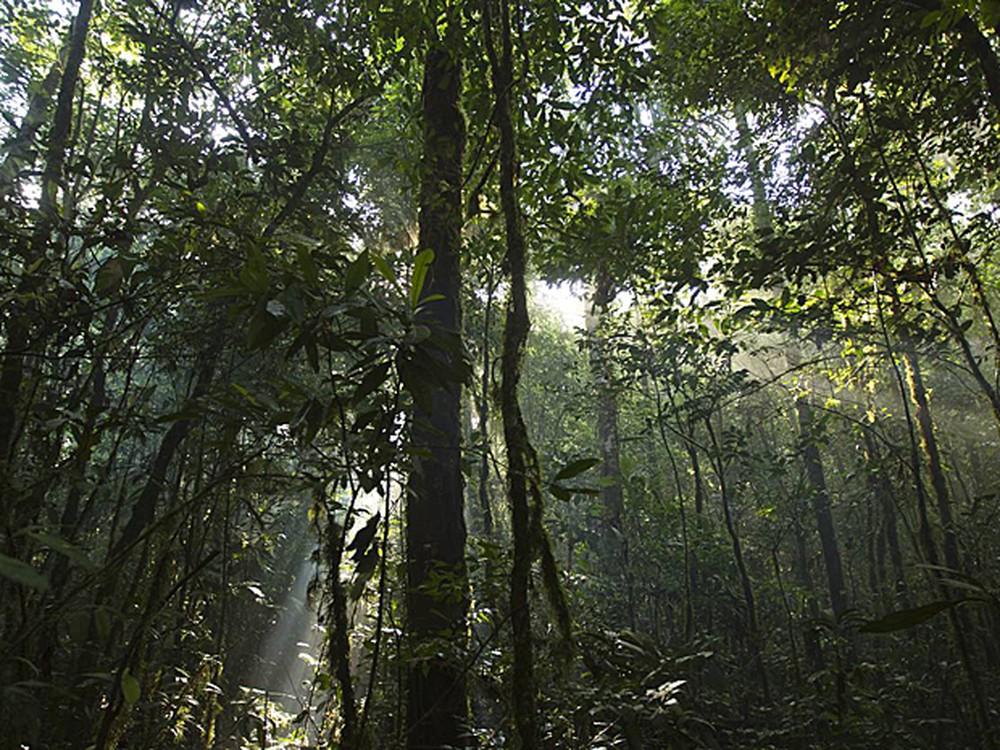 florestaamazonica