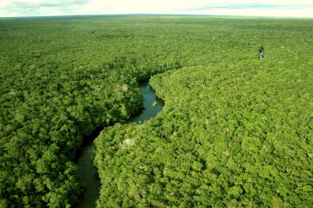 Resultado de imagem para As florestas preservadas