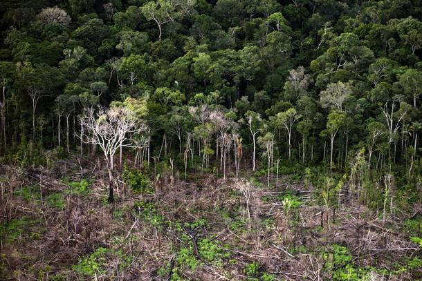 Mapeamento do governo não identifica recuo da floresta secundária